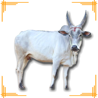 Cow Names In Tamil - All About Cow Photos